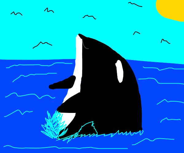Orca majestically rises out of the ocean