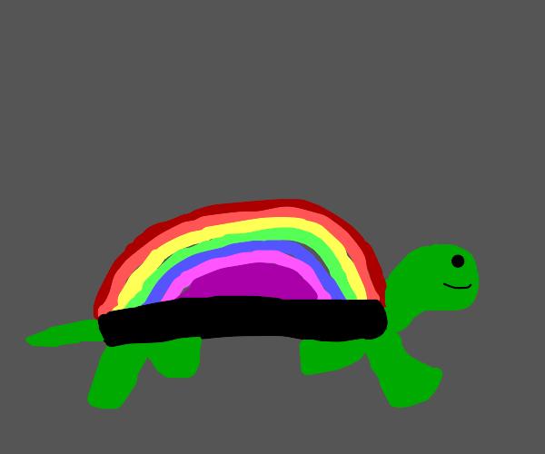 tortoise with rainbow shell