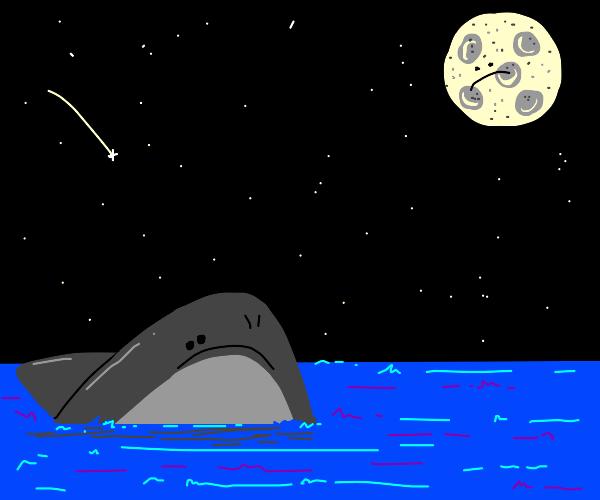 Grey shark frowns at moon. Moon frowns back