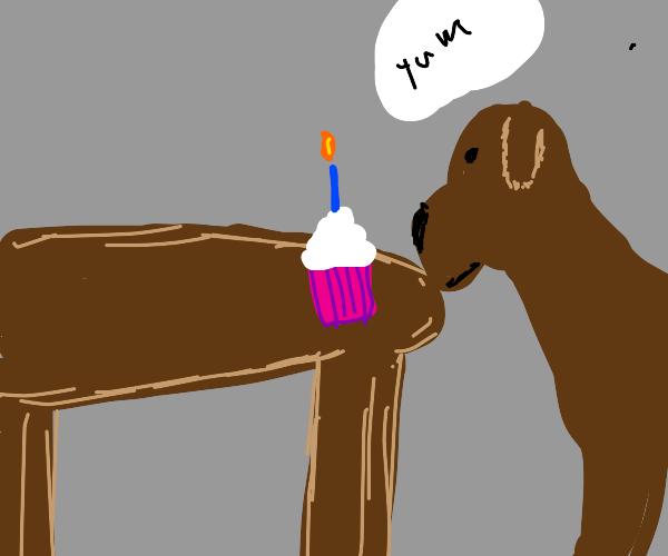 Dog having a birthday cupcake