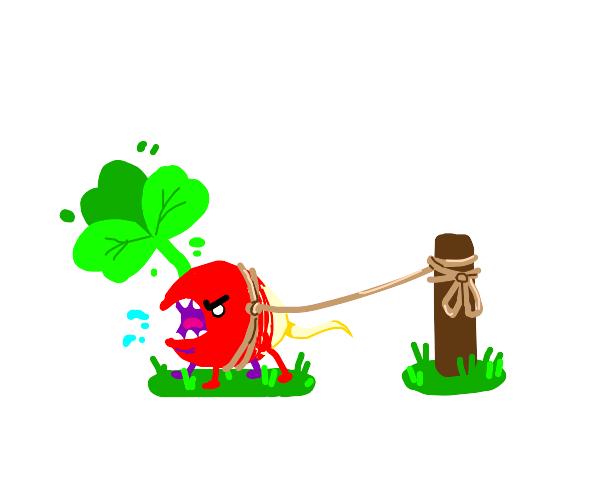 radish on a leash