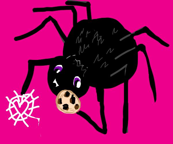 Spider loves cookies