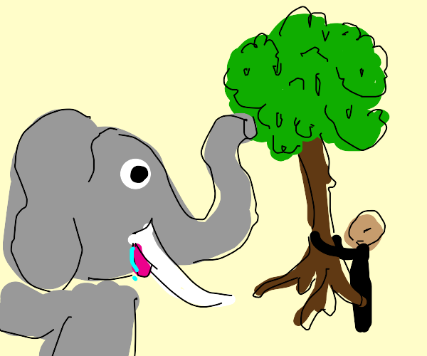 Man holds tree for elephant to eat w/ nose