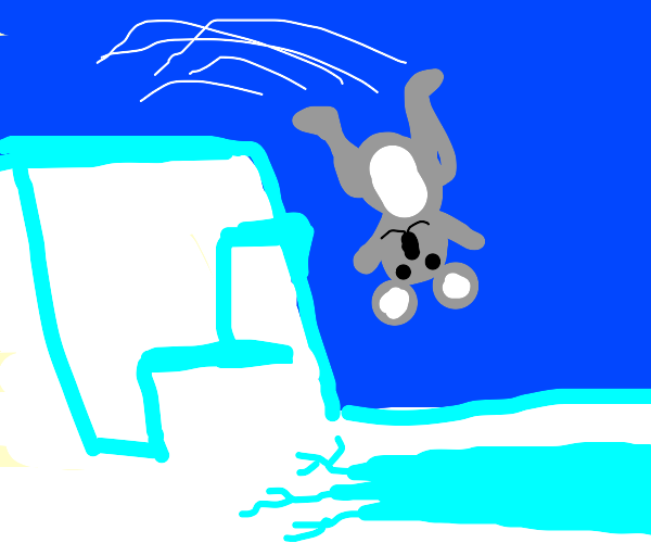 Koala about to take the Arctic Plunge