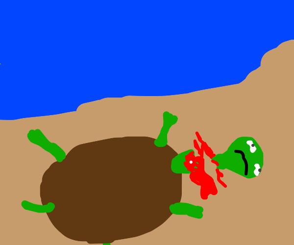 A turtles head chopped off :(
