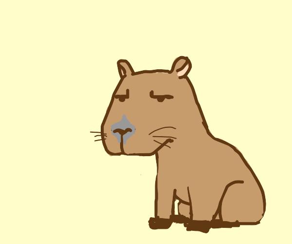 Unamused capybara