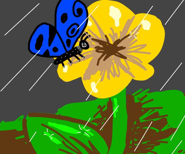 Blue-winged butterfly on puffy flower in rain