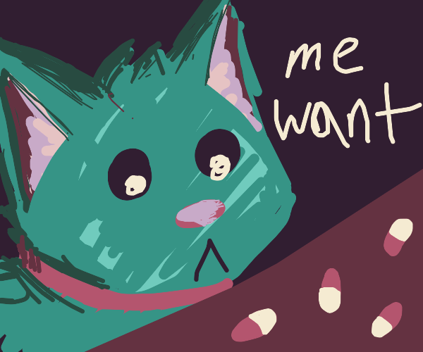 The cat really wants some pills