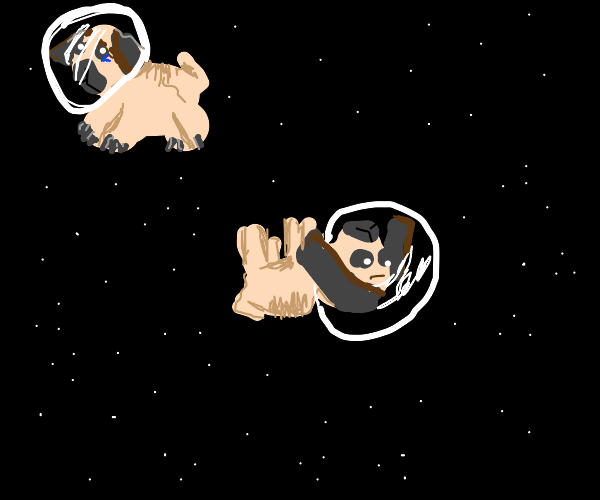 Pugs sadly stuck in space
