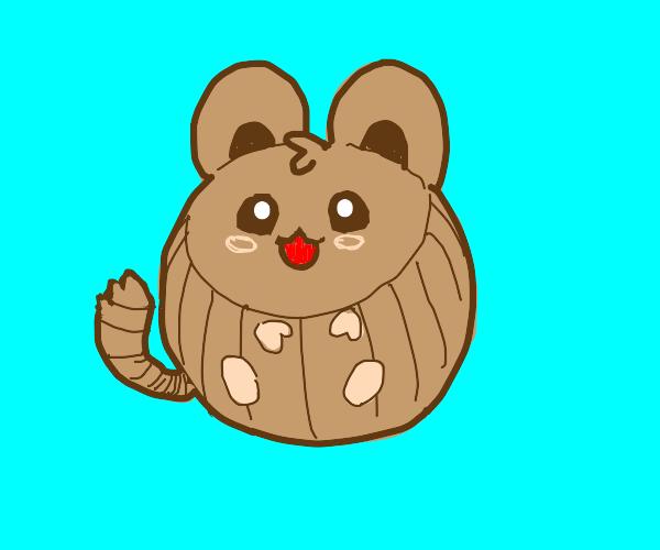 Brown chinchilla
