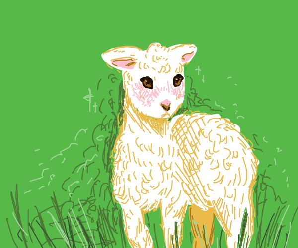 Blushing lil' lamb