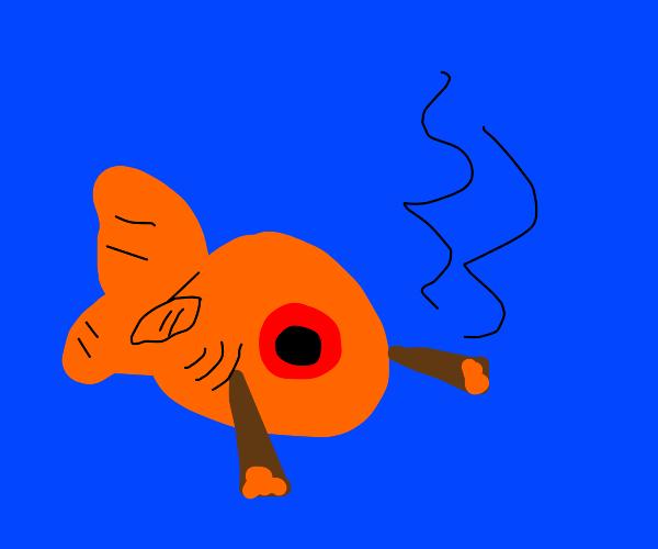 goldfish smoking weed