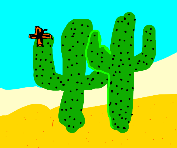 Butterfly landing on a cactus