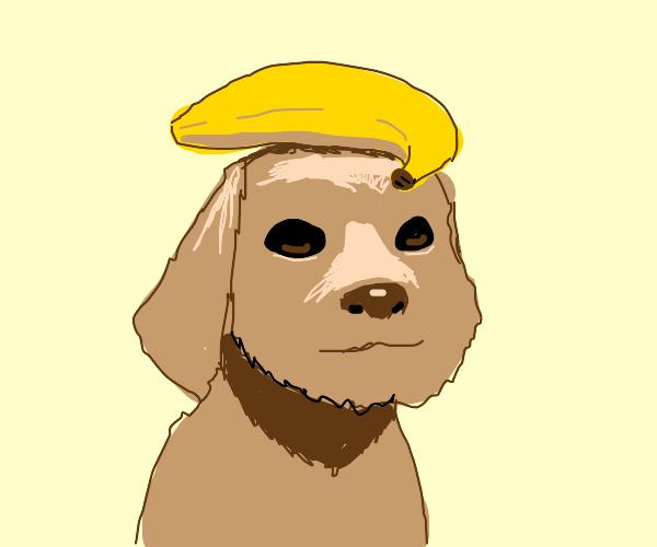 dog with banana on head