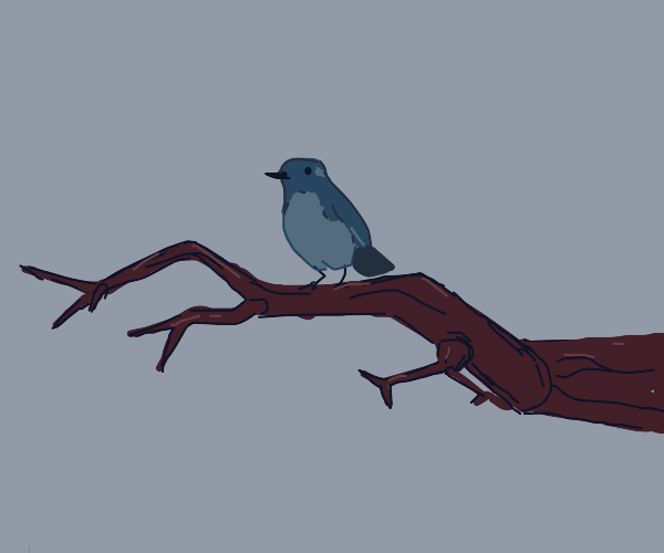 Cute bird on a branch