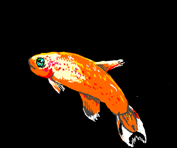 Bright orange fish