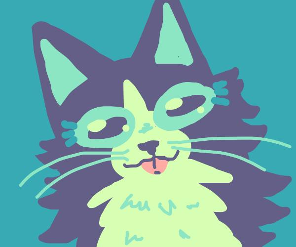 Cat bleps