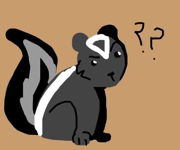 Confused skunk