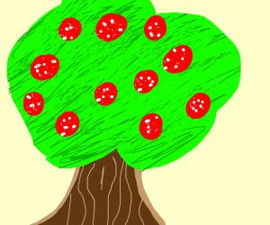Pepperoni tree