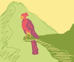 Tropical bird on a cliff