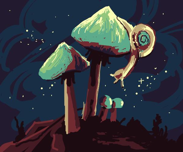 Slug on mushroom
