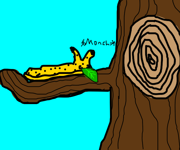 Slug on tree branch