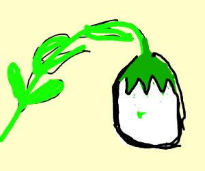 Egg plants avocado