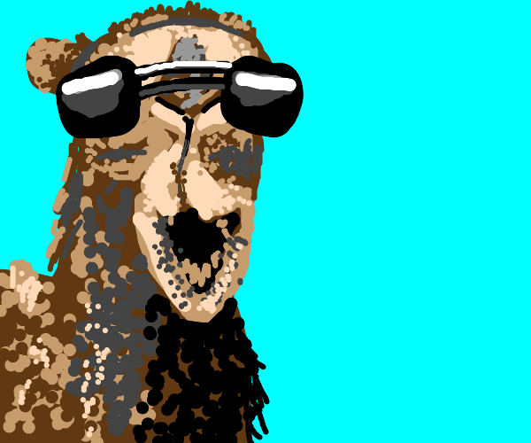Camel with Sunglasses
