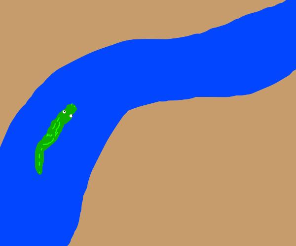 Alligator enjoys swim