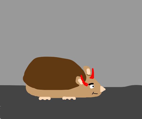 devil hedgehog
