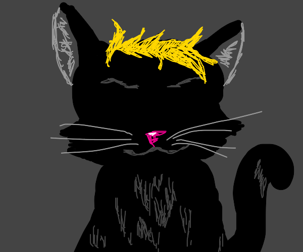 blond black cat
