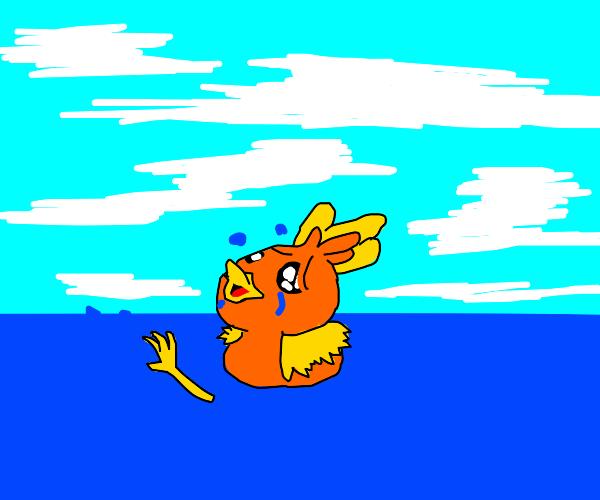 Torchic struggling to swim