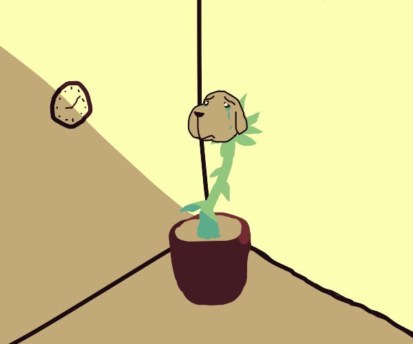 The dog-plant is very sad