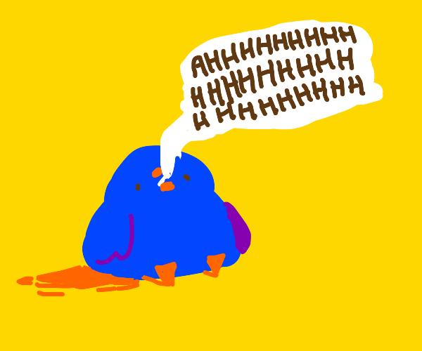 Screaming birb
