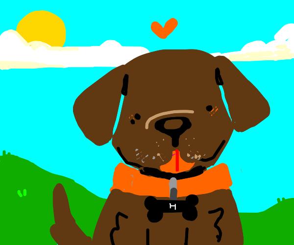 cute brown dog with orange collar