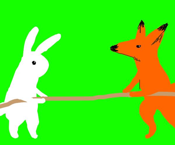 Fox and Bunny tug a war