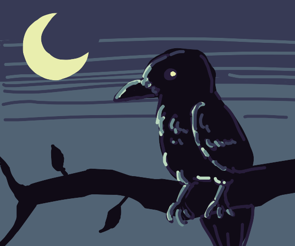 Crow perched in tree at night