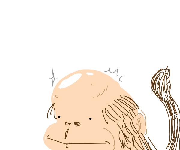 Monkey with bald scalp