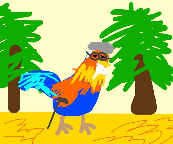 Elder rooster