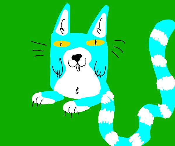 Long tail cat.