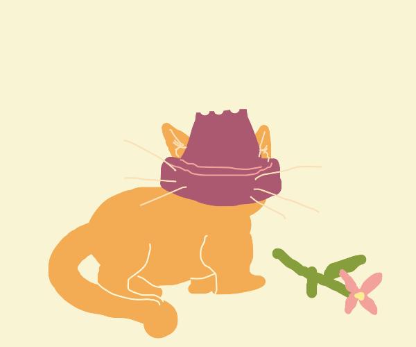 cat with head stuck in flower pot