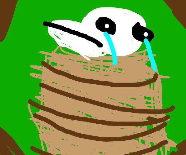 sad panda in a barrel