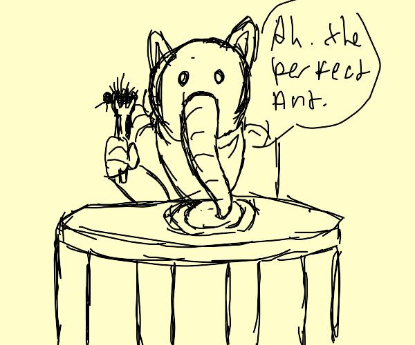 Anteater man tastes the finest ants around!