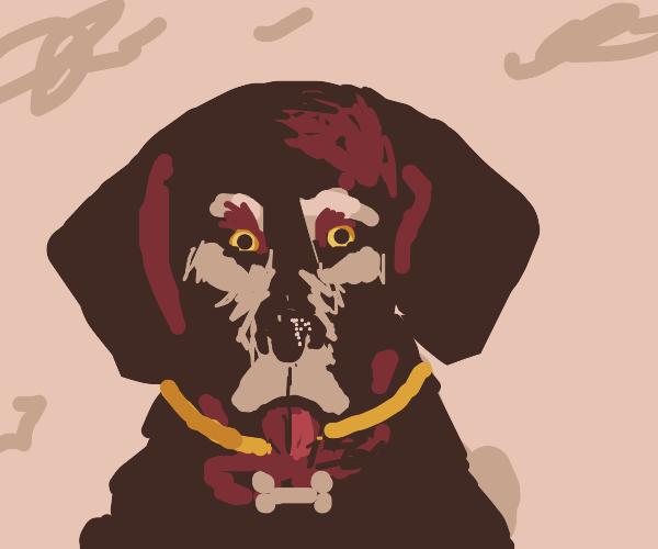 Doggo with a bone collar