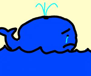 A sad blue whale