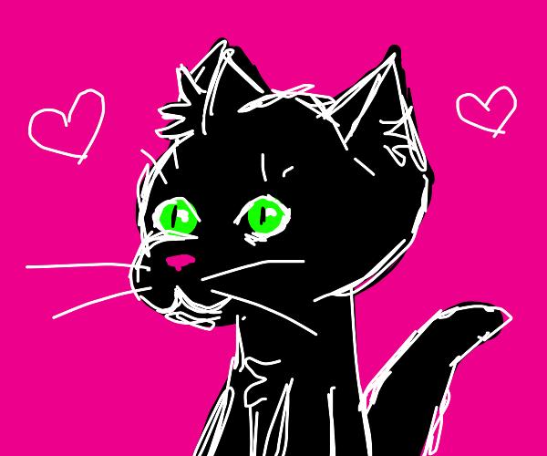 cat wants love