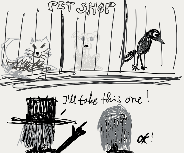Man adopts a pet crow