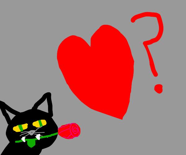 romantic cat?