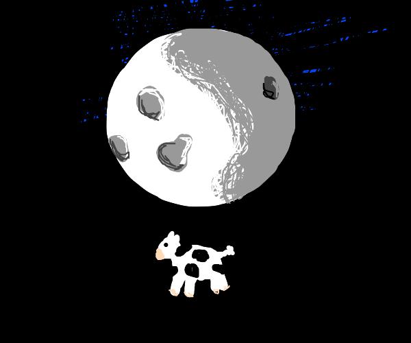 Cow orbits the moon