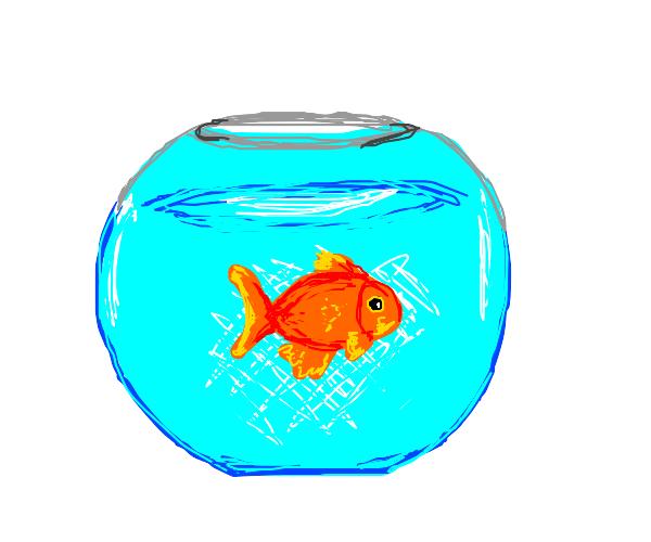 Aquarium with goldfish